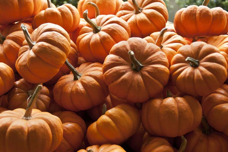 pumpkin-benefits-worlds-healthy-food