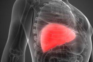 support-liver