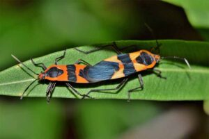 assassin-bug-weirdest-insects