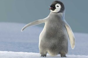 emperor-penguin-flightless-bird