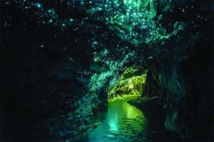 glowworms-cave-new-zealand