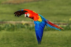 green-wing-macaw-parrot