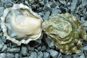 oysters-for-healthy-skin