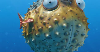 pufferfish-romantic-animals