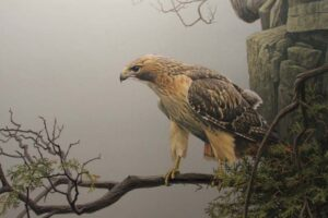 red-tailed-hawk-dangerous-birds