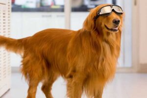 dogs-make-life-worth-living