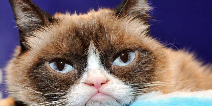 the-grumpy-cat