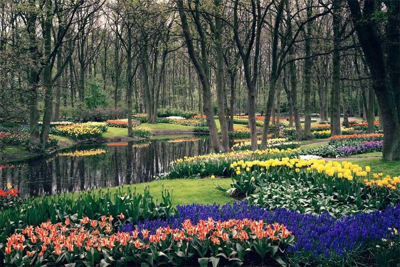 keukenhof-gardens-beautiful-places-in-netherlands