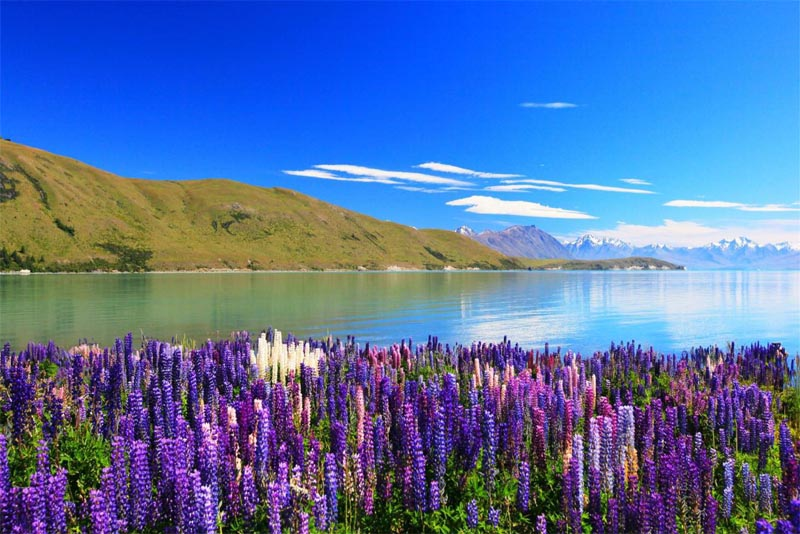 lake-tekapo-beautiful-Places-in-new-zealand