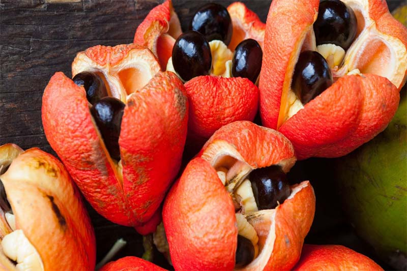 ackee-deadly-fruits