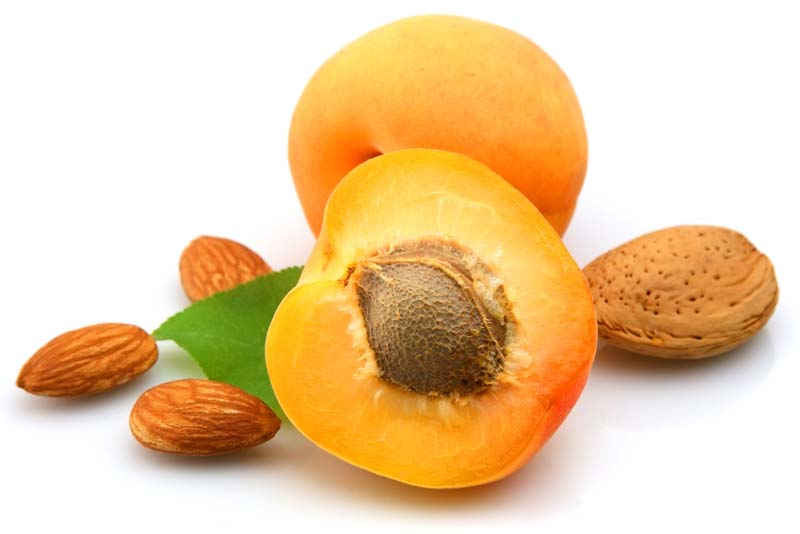 apricot-seeds-deadly-fruits