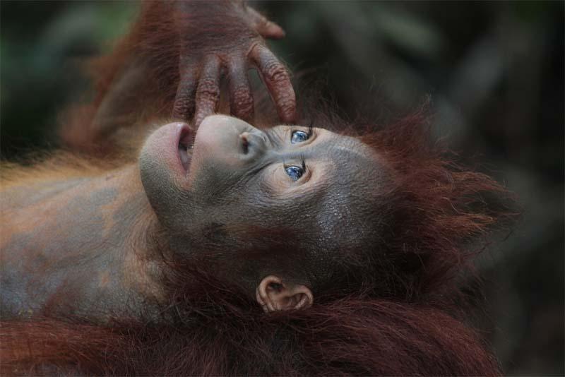 around-260-different-monkey-species-living-worldwide