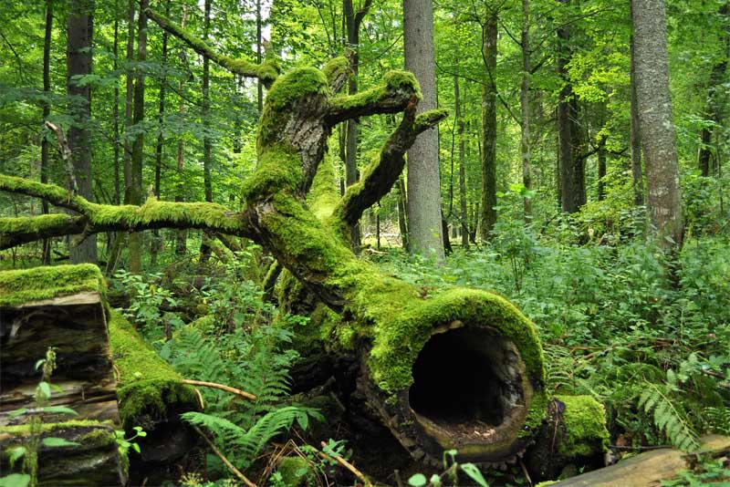 bialowieza-forest-beautiful-places-in-poland
