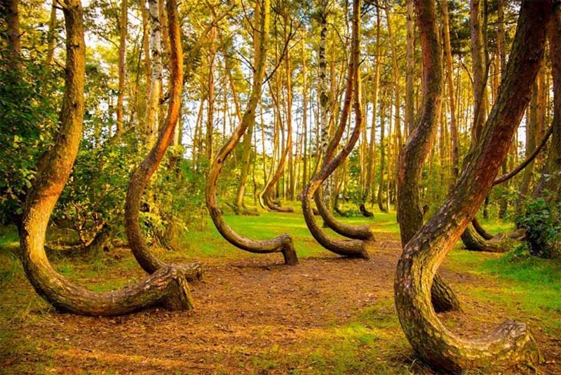 crooked-forest-mysterious-places