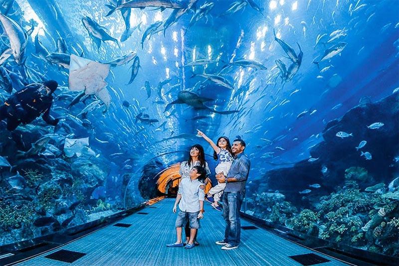 dubai-aquarium-and-underwater-zoo