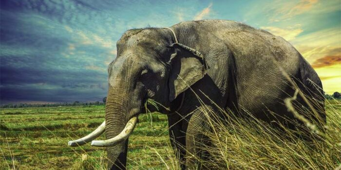 interesting-and-fascinating-facts-about-elephants