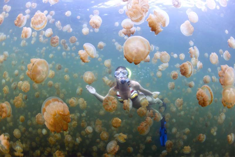 jellyfish-lake-in-palau