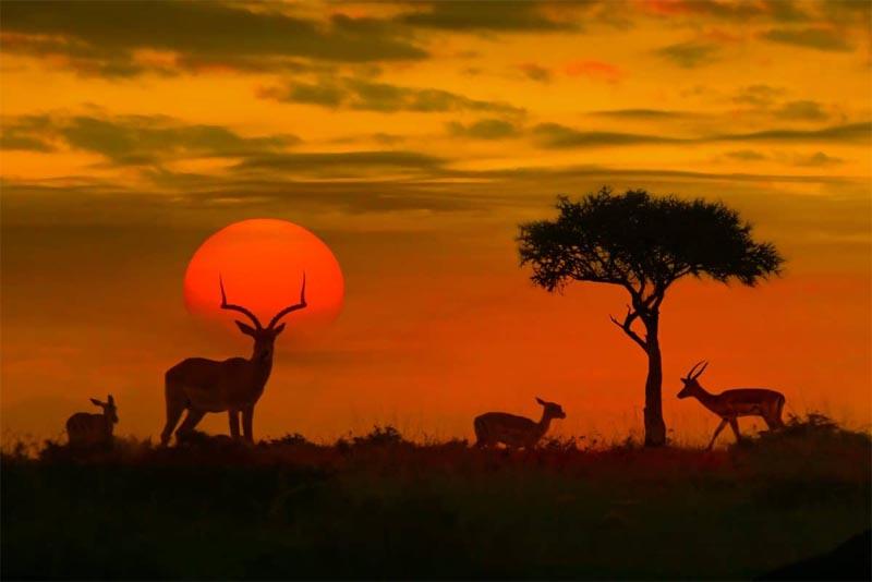 kruger-national-park-south-africa