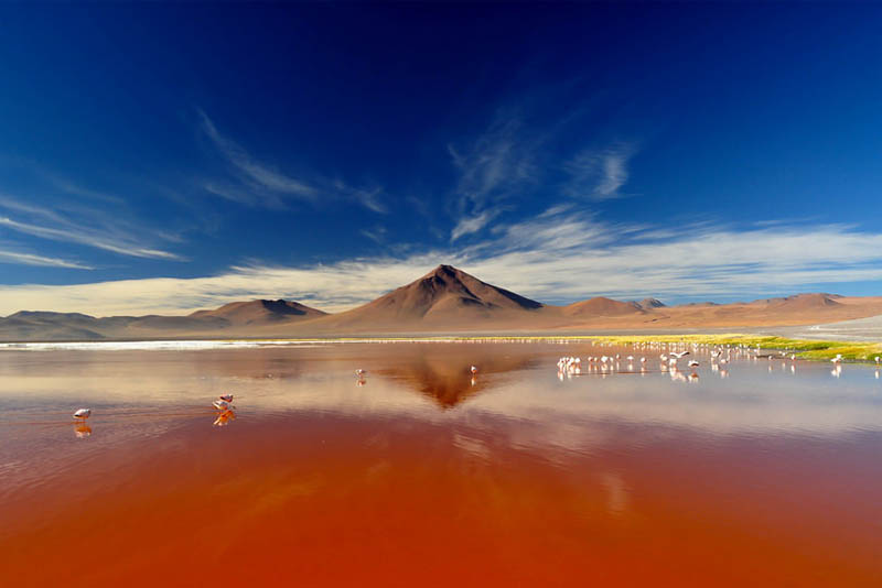 laguna-colorada-south-america