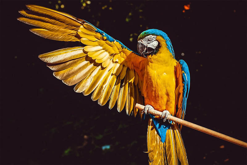 longest-lived-bird-the-macaw