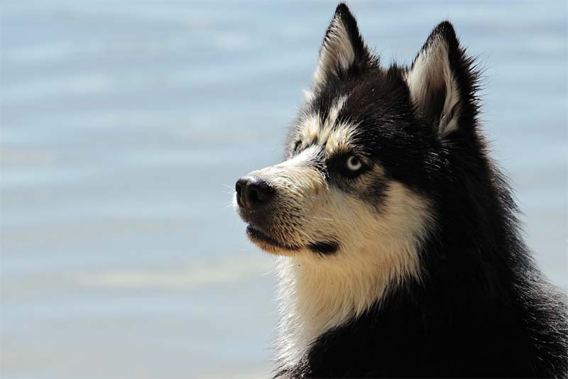 more-than-340-dog-breeds-exist-in-the-world