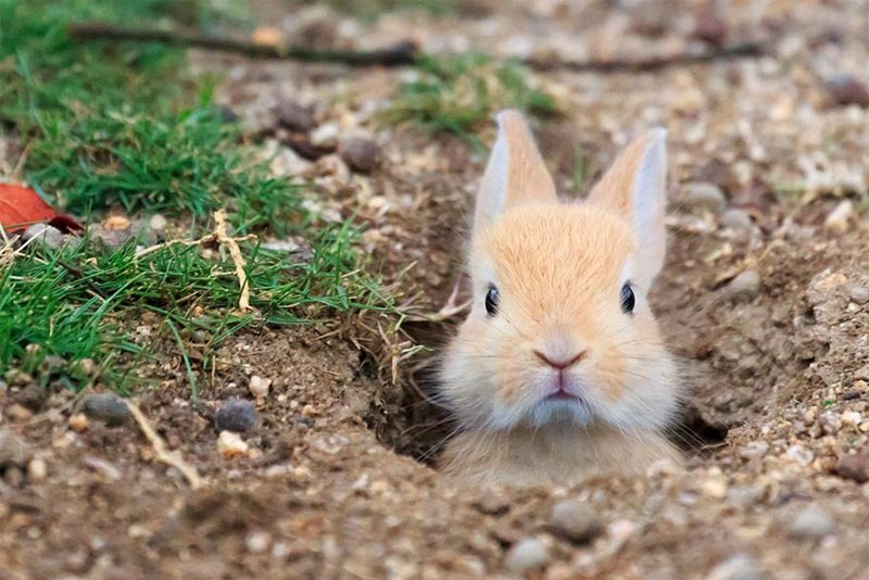 rabbit-animals-with-good-hearing-power