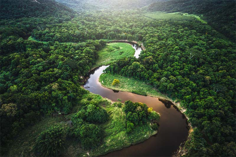 the-amazon-rainforest