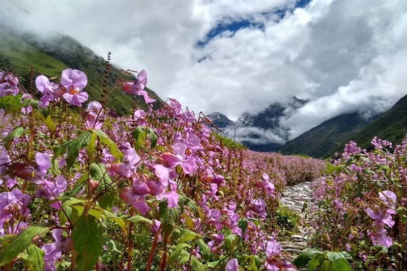 valley-of-flowers-uttaranchal