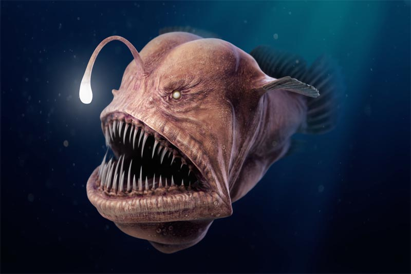 angler-fish-bio-luminescent-animal