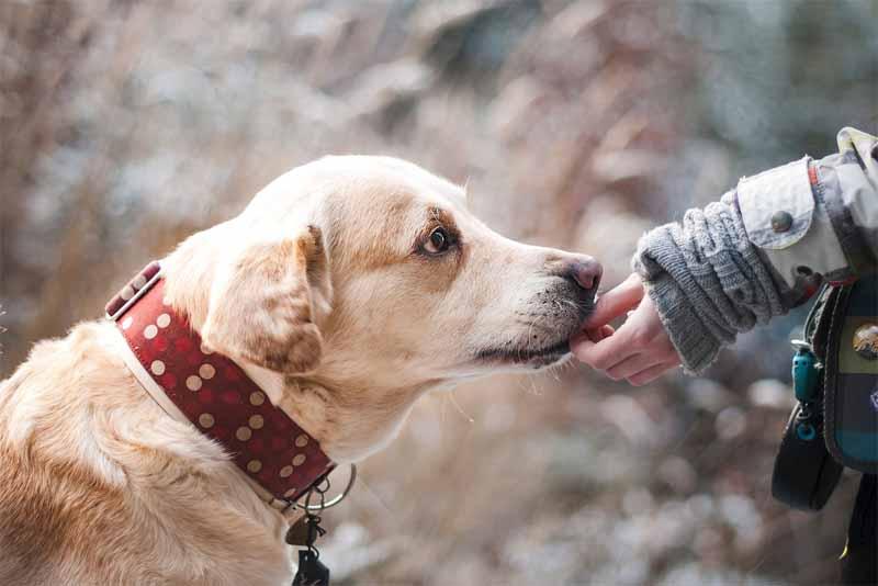 dog-friendliest-animals