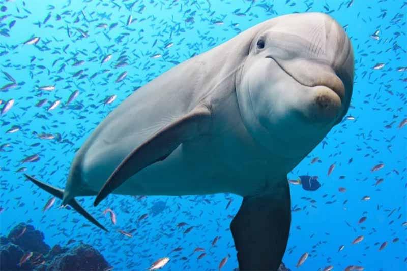 dolphin-friendliest-animals
