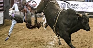 bull-riders-dangerous-jobs-in-the-world