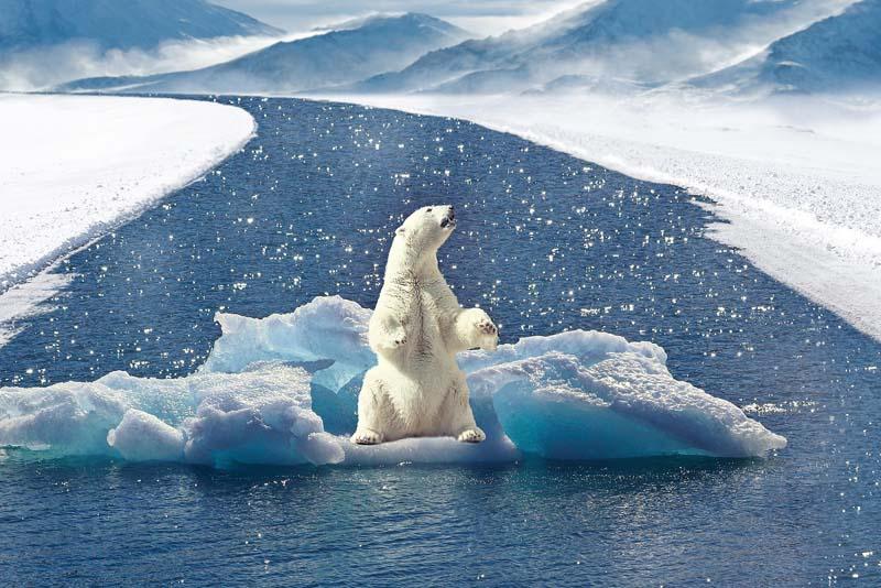 polar-bear-apex-predators