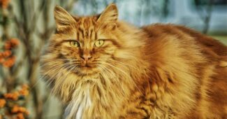 amazing-and-interesting-facts-about-cats