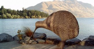 interesting-and-strange-facts-about-kiwi