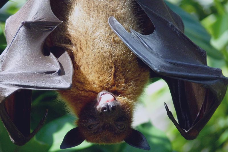 interesting-facts-about-bat