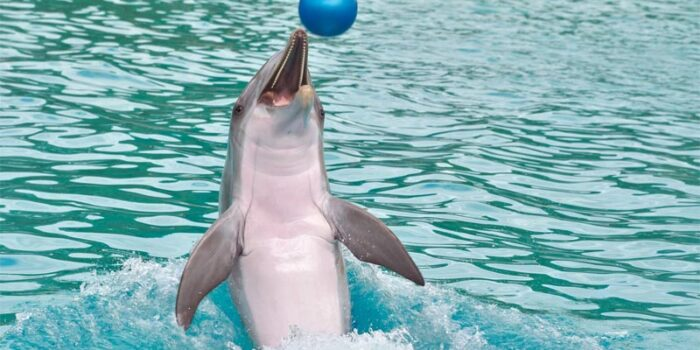 interesting-facts-about-dolphins