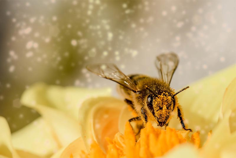 interesting-facts-about-honey-bee