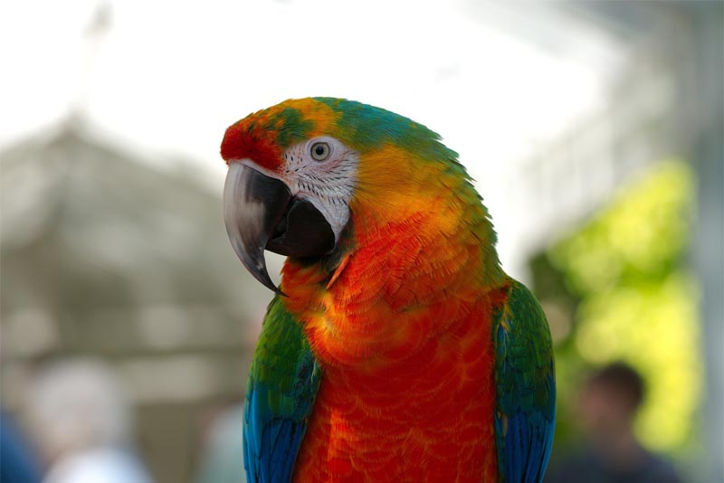 interesting-facts-about-parrots