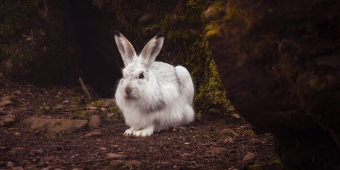 interesting-facts-about-rabbit