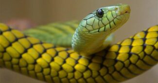 interesting-facts-about-snake