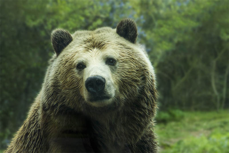 top-10-interesting-facts-about-bear