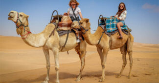 top-10-interesting-facts-about-camel