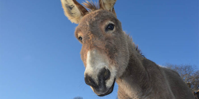 top-10-interesting-facts-about-donkey
