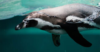 top-10-interesting-facts-about-penguins