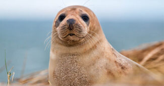 top-10-interesting-facts-about-seal
