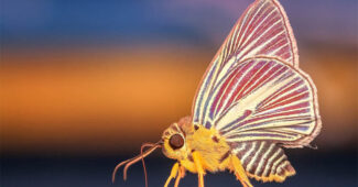 top-10-interesting-facts-about-butterflies