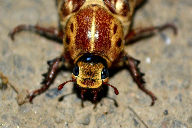 top-10-interesting-facts-about-cockroaches