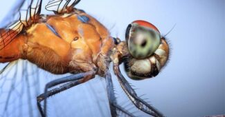 top-10-interesting-facts-about-dragonflies