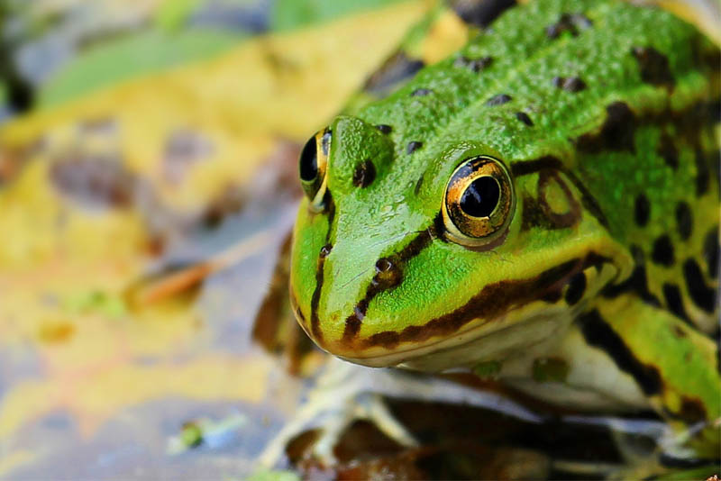 top-10-interesting-facts-about-frogs